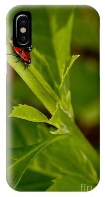 Ladybug Ladybug IPhone Case