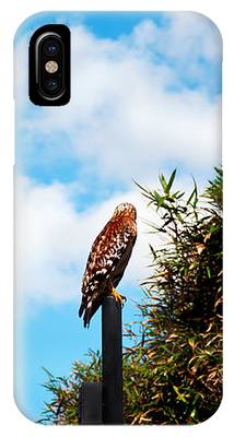 Look Away IPhone Case by Donna Proctor