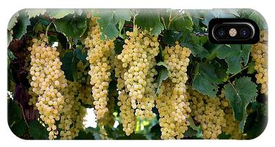Clusters Of Grapes iPhone Cases