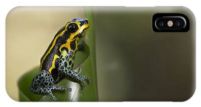 Dart Frogs Phone Cases