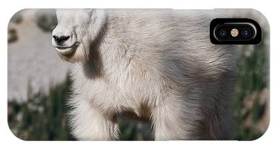 Mountain Goat Kid Standing On A Boulder IPhone Case