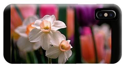 IPhone Case featuring the photograph Narcissus And Tulips by Rona Black