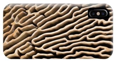 Bracket Fungus Phone Cases