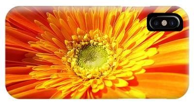 Orange Gerbera IPhone Case