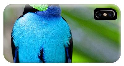 Paradise Tanager IPhone Case