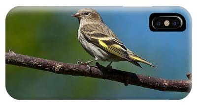 Pine Siskin Perched On A Branch IPhone Case