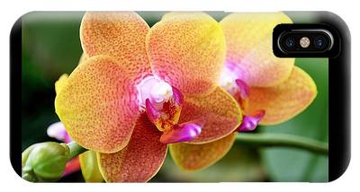 IPhone Case featuring the photograph Pink Yellow Orchid by Rona Black