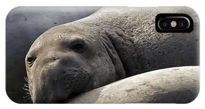 Point Piedras Blancas Elephant Seal 1 IPhone Case
