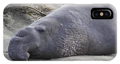Point Piedras Blancas Elephant Seal 3 IPhone Case