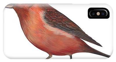 Crossbill IPhone Cases