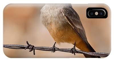 Say's Phoebe On A Barbed Wire IPhone Case