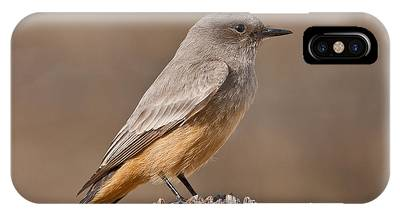 Say's Phoebe On A Fence Post IPhone Case