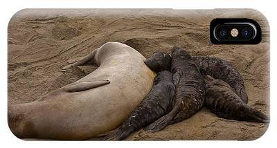Seal And Pups IPhone Case