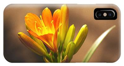 IPhone Case featuring the photograph Single Kaffir Lily Bloom by Richard J Thompson