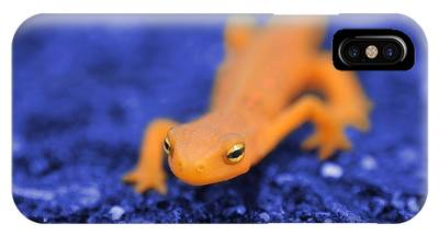 Salamander IPhone Cases