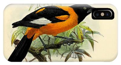 Oriole IPhone Cases