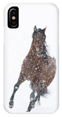 Andalusian Stallion Phone Cases