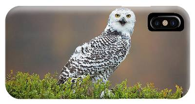 Snowy Owls Phone Cases