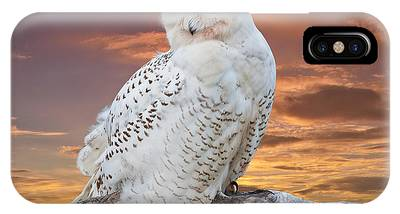 Snowy Owl Perched At Sunset IPhone Case