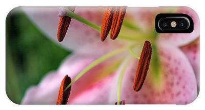 IPhone Case featuring the photograph Stargazer by Rona Black