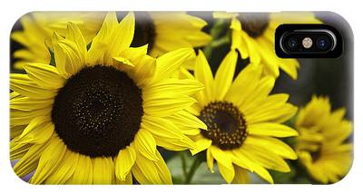 IPhone Case featuring the photograph Sunflower V. 'italian White ' by Richard J Thompson