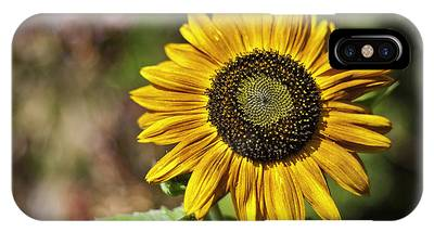 IPhone Case featuring the photograph Sunflower Vr. 'velvet Queen ' by Richard J Thompson