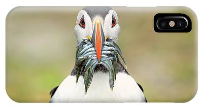 Puffins Phone Cases