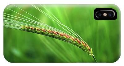 The Corn IPhone Case