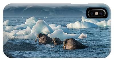 Arctic Phone Cases
