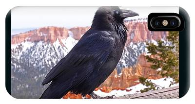 IPhone Case featuring the photograph The Raven by Rona Black