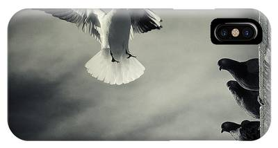 Seagulls Phone Cases