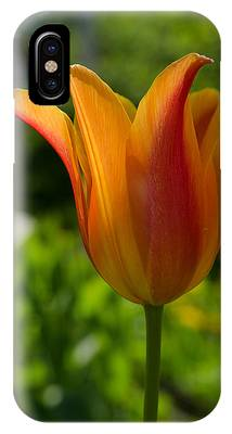Tulip On The Green Background IPhone Case by Michael Goyberg