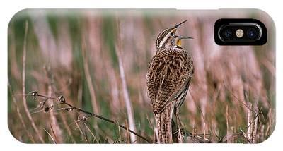 Meadowlark Phone Cases