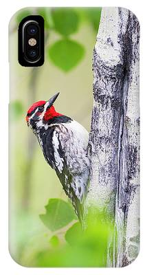 Sapsucker Phone Cases