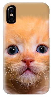 IPhone Case featuring the photograph Kitty by Michael Goyberg
