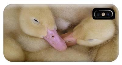 Baby Ducklings IPhone Case