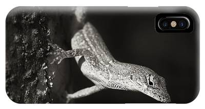 Brown Anole Phone Cases