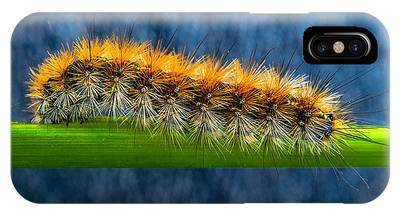 IPhone Case featuring the photograph Butterfly Caterpillar Larva On The Stem by Michael Goyberg