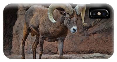 Desert Bighorn Sheep Ram I IPhone Case