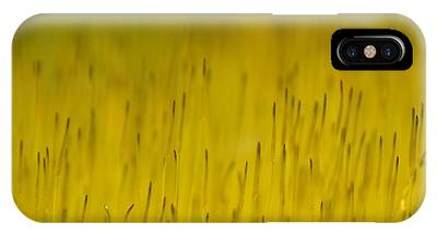 Moss In Yellow IPhone Case