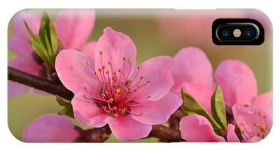 Peach Beautiful IPhone Case