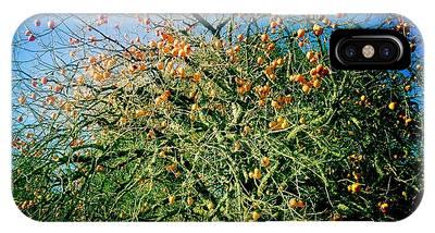 Persimmon Tree IPhone Case