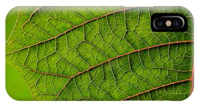 Poinsettia Leaf I IPhone Case