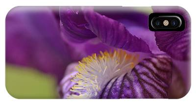 Purple Iris 1 IPhone Case