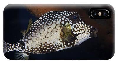 Trunkfish Phone Cases