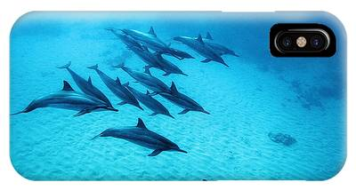 Dolphin IPhone Cases