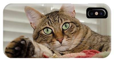 IPhone Case featuring the photograph The Cat With Green Eyes by Michael Goyberg