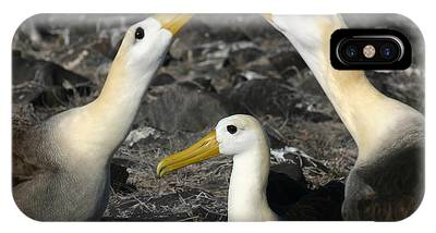 Waved Albatross Phone Cases