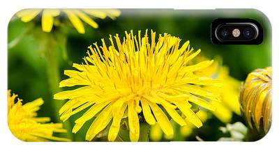 IPhone Case featuring the photograph Yellow Dandelions by Michael Goyberg