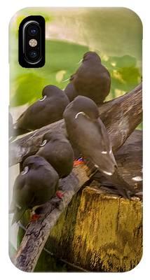 Inca Terns IPhone Case by Richard J Thompson